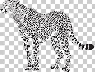 Cheetah Felidae Leopard PNG