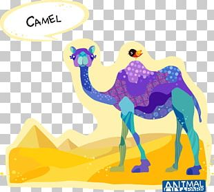 Dromedary Bactrian Camel Cartoon Drawing PNG