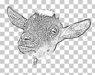 Goat Yoga Cattle Drawing Line Art PNG