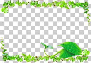 Leaf Green Vine PNG