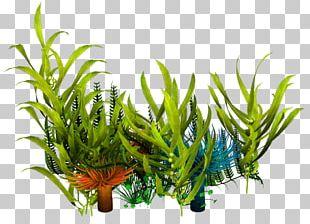 Underwater Aquatic Plants Seaweed PNG