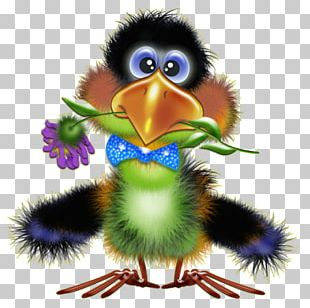 Bird Drawing Funny Animal PNG