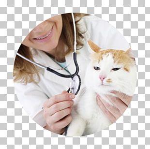 Sphynx Cat Kitten Pixie-bob Cornish Rex Pixiebob Cats PNG