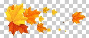 Color Banner Autumn Leaf PNG