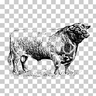 Sheep Cattle Ox Bull Horn PNG