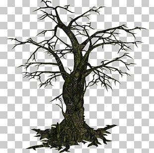 Tree Oak Woody Plant PNG