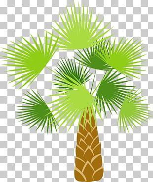 Coconut Tree Arecaceae Cartoon PNG