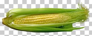 Corn On The Cob Maize Food Corn Kernel PNG