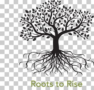 Root Tree Drawing PNG