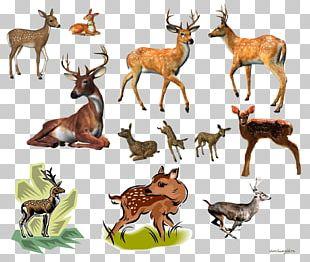 Reindeer White-tailed Deer Elk Musk Deer PNG
