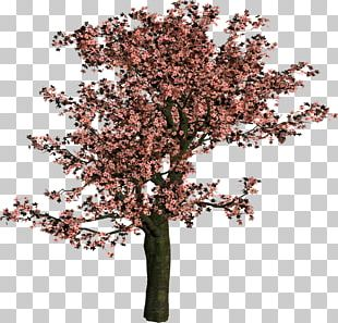 Tree Shrub Woody Plant Branch PNG