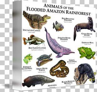 Amazon Rainforest Amazon.com Tropical Rainforest Animal PNG