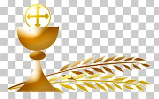 First Communion Eucharist Extraordinary Minister Of Holy Communion Parish Mass PNG