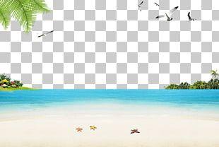 Sandy Beach Ocean Beach PNG