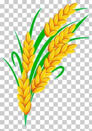 Rice Euclidean PNG