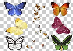 Monarch Butterfly Pieridae Moth Overlay PNG