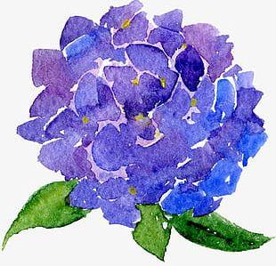Transparent Background Floral Botanical Watercolor Flowers PNG