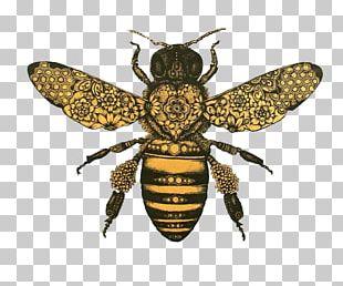 Honey Bee Drawing Bumblebee PNG