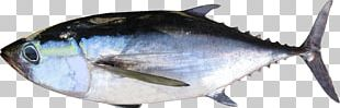 Thunnus Fish Products Oily Fish Milkfish PNG