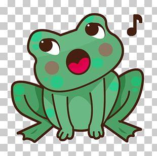 True Frog Tree Frog Illustration PNG
