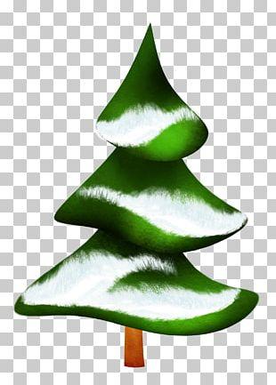 Fir Pine Green Christmas Tree PNG