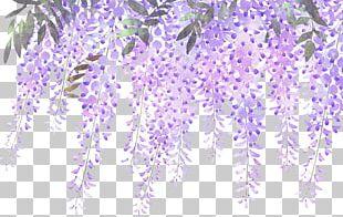 Lavender Flower Purple Wisteria PNG