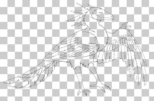 Feather Line Art Beak White Sketch PNG