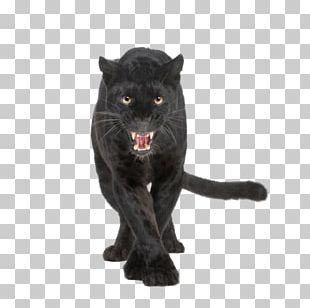 Leopard Black Panther Jaguar Cougar Lion PNG