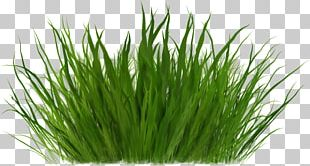 Herbaceous Plant Grass Cartoon Grass PNG