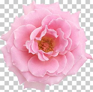Pink Flowers Oil Painting Rose PNG