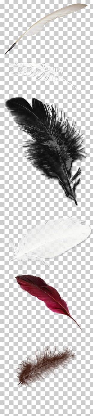 Feather White PNG
