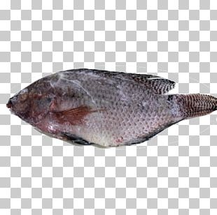 Sole Fish Products Tilapia Oily Fish Fauna PNG