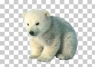 Polar Bear Cubs Baby Polar Bears PNG