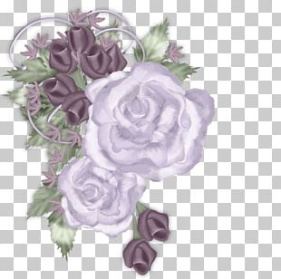 Cabbage Rose Garden Roses Floral Design Cut Flowers PNG