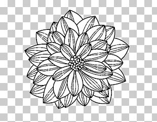 Floral Design Drawing Flower PNG