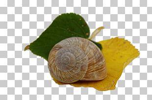 Autumn Leaves Gastropods Snail Leaf PNG