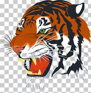 Siberian Tiger Bengal Tiger Baby Tigers PNG