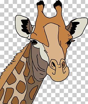Leopard Northern Giraffe PNG