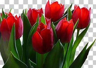 Flower Tulip Desktop 720p 1080p PNG