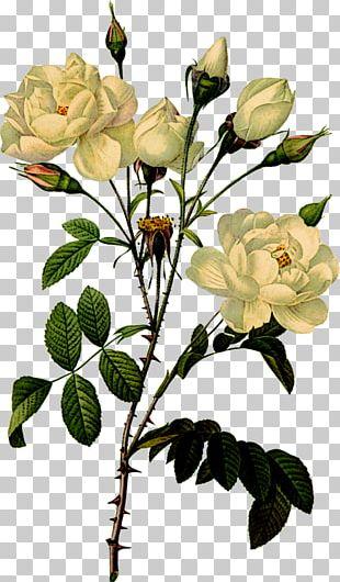 Printing Botanical Illustration Botany Printmaking Flower PNG