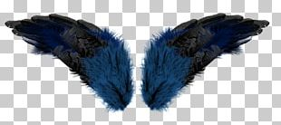 Feather Wing Aile PNG