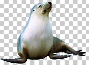 Sea Lion Harbor Seal Earless Seal Walrus PNG