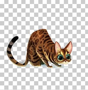 Bengal Cat Ocicat Sphynx Cat Ragdoll Kitten PNG