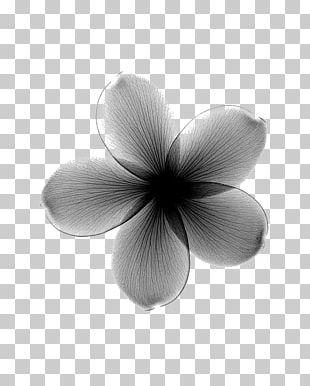 Towel Flower X-ray Frangipani Lilium PNG