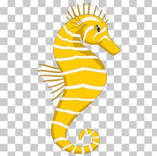 Seahorse Equestrian PNG