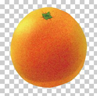 Clementine Grapefruit Mandarin Orange Tangerine Tangelo PNG