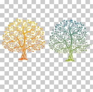 Family Tree Tree Of Life Drawing PNG