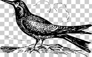 Bird Line Art PNG