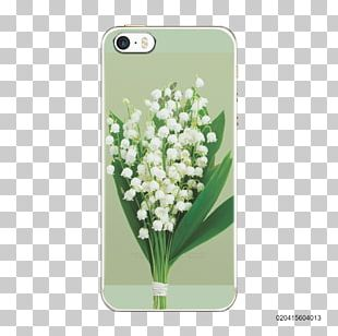 Lily Of The Valley Flower Stock Photography PNG