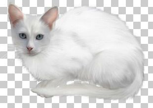 Turkish Van Turkish Angora Kitten Angora Rabbit PNG